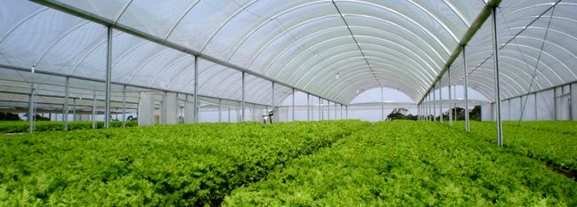 Iran Greenhouse Exports Earn $350 Million in 9 Months