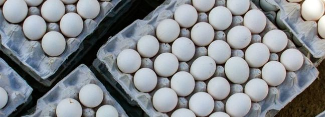 Egg Exports Exceed 10K Tons in 1 Month