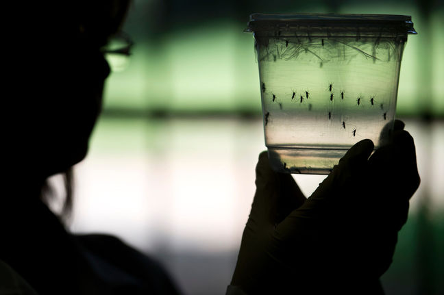 Zika May Cause Brain Damage in Adults, Too