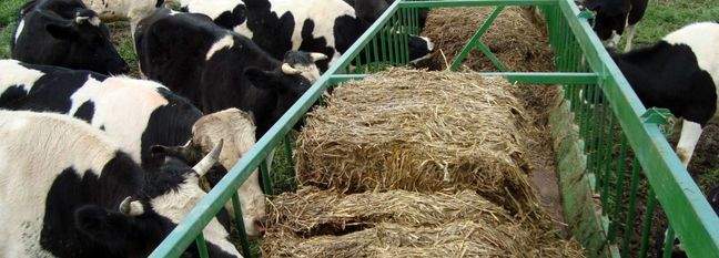 Call for Preventing Outbound Livestock Smuggling