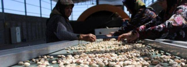 Pistachio Exports Top 35K Tons in 4 Months