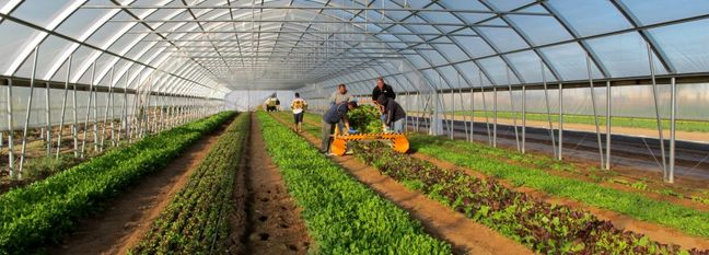 Two Seawater Greenhouses Planned in Southern Iran