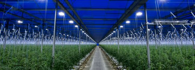 Tehran Accounts for Largest Share of Iran's Greenhouses