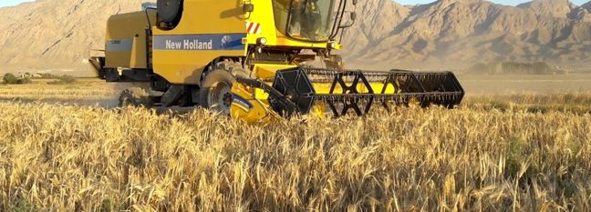 Iran Wheat Production, Consumption Reviewed