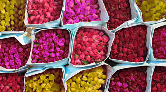 Iran Flower Exports Earn $2.4m in 4 Months