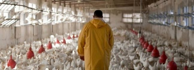 Q1 Industrial Chicken Farms' PPI Up 12%