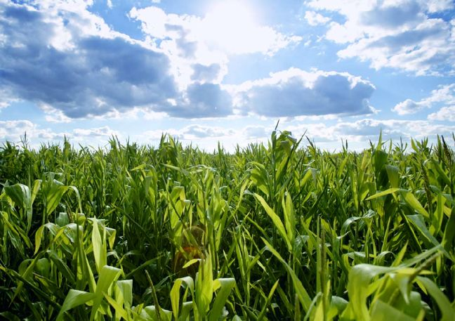 IoT Solutions to Improve Agro Sector, Energy Efficiency
