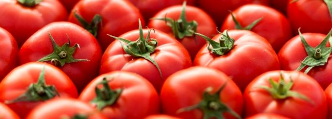 Tomato Exports Earn $98m in Two Months