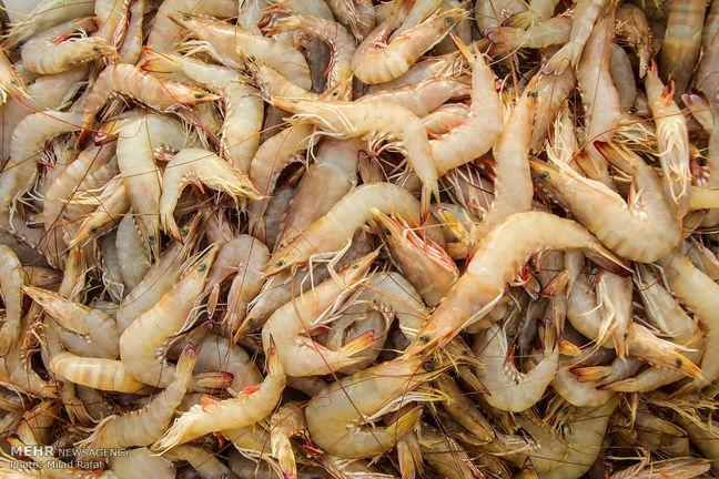 Iran, France Enter Joint Venture for Shrimp Production